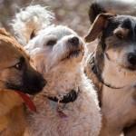 Em nome do bem-estar animal