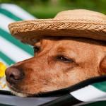 O que fazer com seu animal de estimação quando viajar?