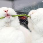 Os animais também merecem uma feliz Páscoa
