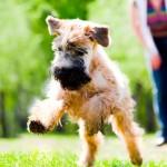 Prática de esportes com cães exige cuidados