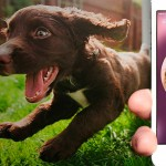 Adoção de cães fica mais fácil com a ajuda de aplicativo