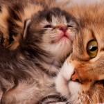 Alimentação correta faz gatos viverem mais