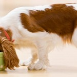 Conheça o comedouro certo para cada tipo de cão