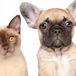 Controle populacional de cães e gatos ampliado