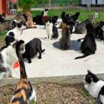Fechamento de gatil no Centro do Rio gera polêmica