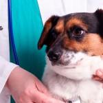 Praticidade para o dia a dia do veterinário