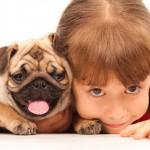 Revisão de tabela do Simples pode beneficiar veterinários