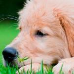 Sinais de alerta para a saúde do seu cão