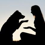 Troca de olhares explica amor entre cães e humanos