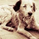 Crime contra animais tem condenação inédita no país