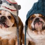 Cuidados com os cães no Inverno