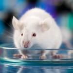 Experimentação animal e ética em questão