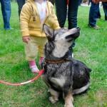 Leblon tem feira de adoção de cães e gatos
