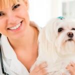 Mudanças na educação da Medicina Veterinária ganha espaço