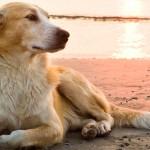 Presença de cães nas areias das praias em questão