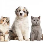 Projeto garante um novo lar para 15 mil pets