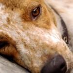 Software estima com precisão população de cães nas ruas