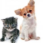 Vira-Lata ou cão de raça, quem resiste mais às doenças?