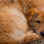 Campanha de agasalhos para cães e gatos abandonados