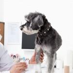 Congresso coloca em debate mais de 20 especialidades da medicina veterinária