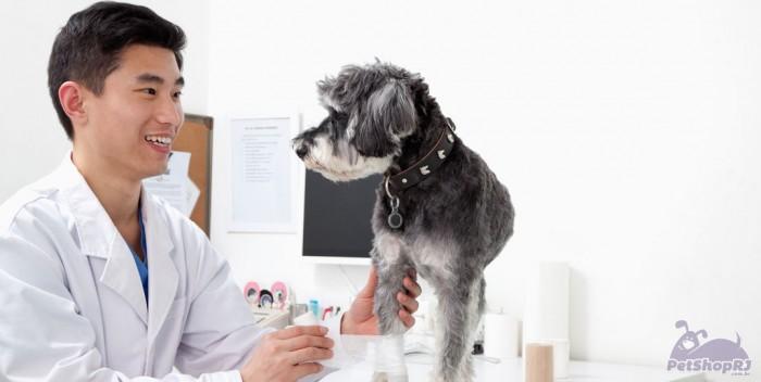 http://www.petshoprj.com.br/blog/wp-content/uploads/2015/07/Congresso-coloca-em-debate-mais-de-20-especialidades-da-medicina-veterinaria-700x352.jpg