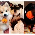 Desafio dá bons exemplos de cuidado e proteção animal