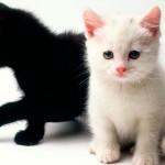 Dicas para cuidar bem de gatos filhotes