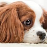 Exposição e vendas de animais: prazo até dia 13 para adaptação às regras