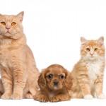 Saiba o que é mito ou verdade quando se fala de pets