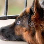 Sumiço de animais pode ser um caso de polícia