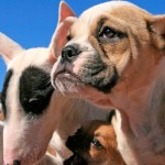 Brasil perde posição no ranking mundial do mercado pet