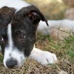 Guerra para combater maus-tratos contra os animais