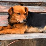 Guia mostra como ajudar cão ou gato de rua