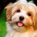 Métodos alternativos no ensino veterinário com mais espaço