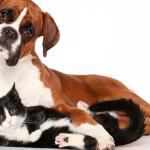 Nova origem para a domesticação dos cães
