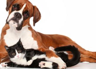 Esportes e exercícios na companhia de pets