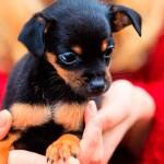 Oportunidades e dicas para uma boa adoção de pets