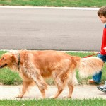 Quantas vezes, por dia, passear com o seu cão