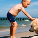 Risco à beira mar para os cães