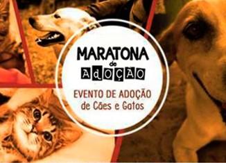 Uma maratona em nome da adoção de animais