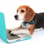 Universidade americana pesquisa inteligência de cães