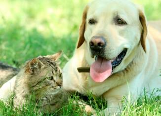 Cães e gatos em capítulo de guia de pesquisa