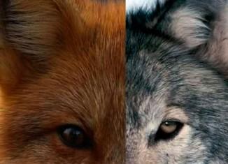 Canídeos na luta contra a extinção