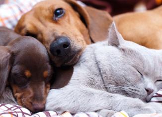 Centro espírita para animais de estimação
