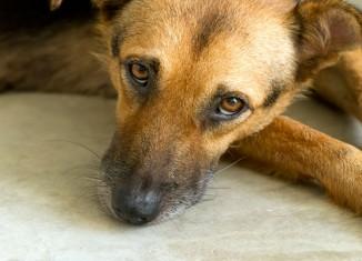 Centros de zoonoses na mira de CPI dos maus-tratos