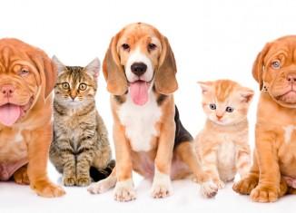 Controle populacional de cães e gatos em questão