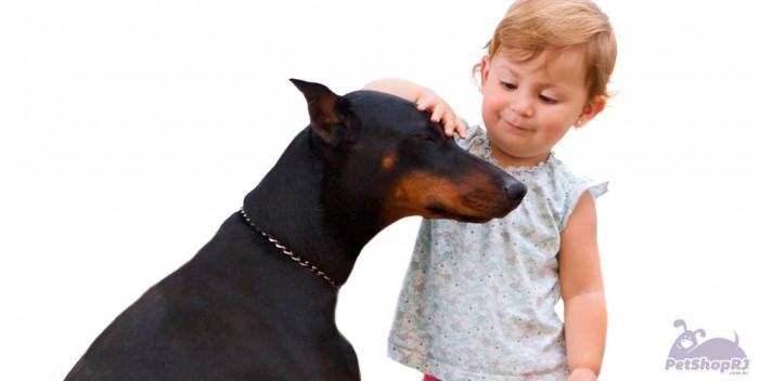 Crianças ganham cartilha sobre direitos dos animais