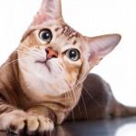 Dia de declarar o seu amor pelos gatos