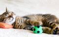 Dicas-para-evitar-bolas-de-pelos-nos-gatos