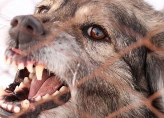 Foco no combate à raiva animal